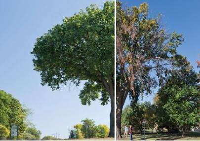 injectable solutions for landscape trees onnurserycrops