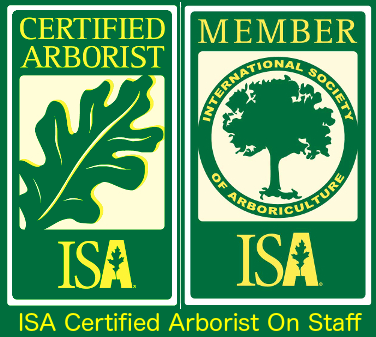 Certified Arborist International Society of Arboriculture